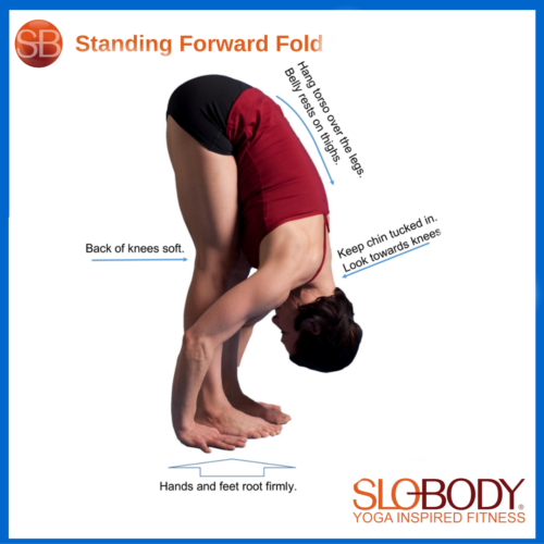 DD Refresher: Standing Forward Fold Video Featured Image